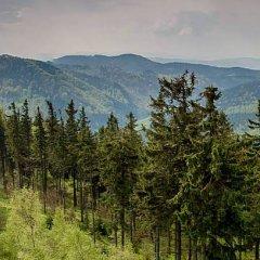 Góra Dzikowiec - Wieża widokowa (836 m n.p.m.)