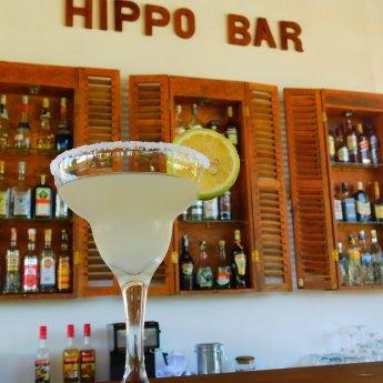 Hippo Bar