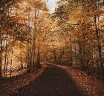 Pobyt jesienny w Zamku Bożejów