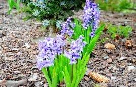 Wiosna zawitała w naszym Pałacyku!