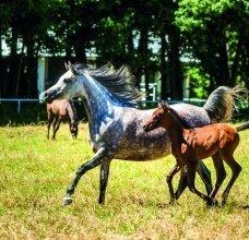 konie2a.jpg